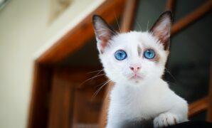 Kapan anak kucing boleh makan
