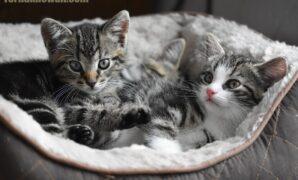 cara memberi makan anak kucing yang baru lahir