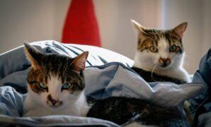 manfaat merawat kucing