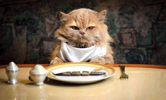 Fungsi minyak ikan untuk kucing