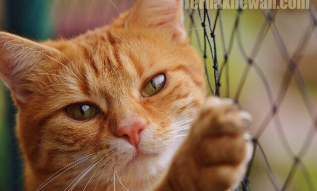 Makanan untuk kucing bulu rontok