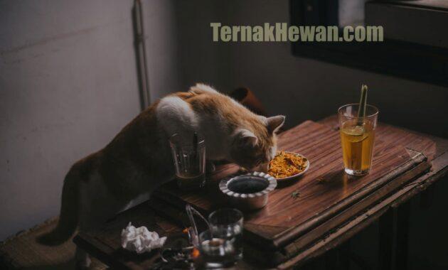 Makanan kucing kampung terbaik