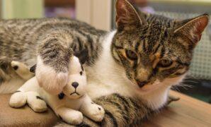 Cara menghilangkan kutu kucing secara alami