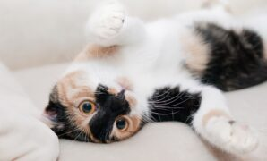 cara memelihara anak kucing