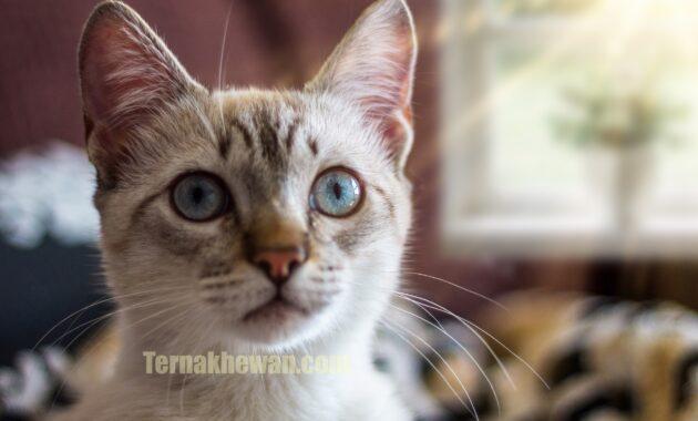 Kenapa kucing muntah dan mencret