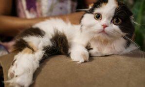 merawat bulu kucing agar tidak rontok