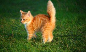 Merawat anak kucing tanpa induknya