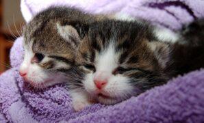 Makanan untuk kucing baru lahir