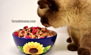 Cara memberi makanan kucing
