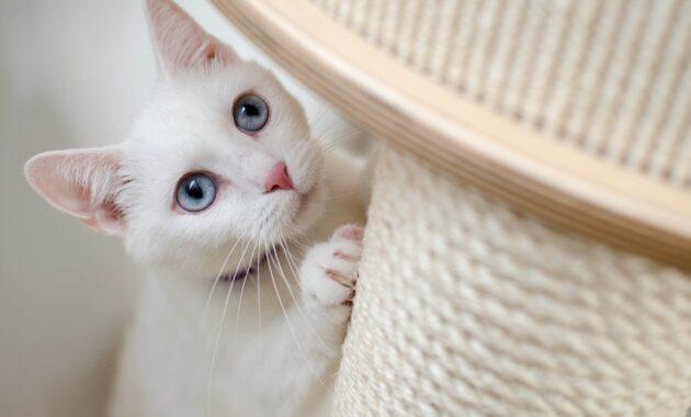 Cara merawat kucing umur 1 bulan