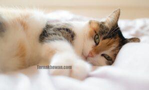 Cara merawat kucing sakit
